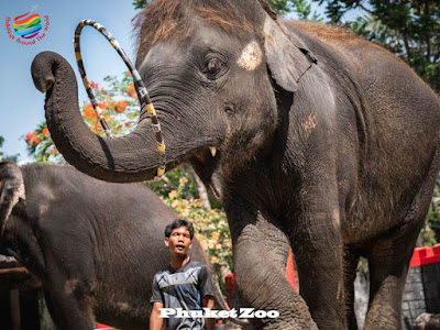 Elephants Show - Phuket Zoo