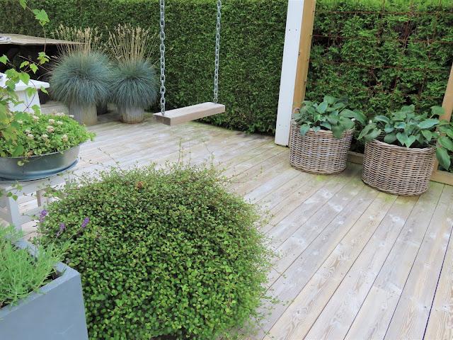 Jeanette klarer seg utmerket med å ha terrasse som hage - her bugner det av grønnsvær IMG_3407 (2)