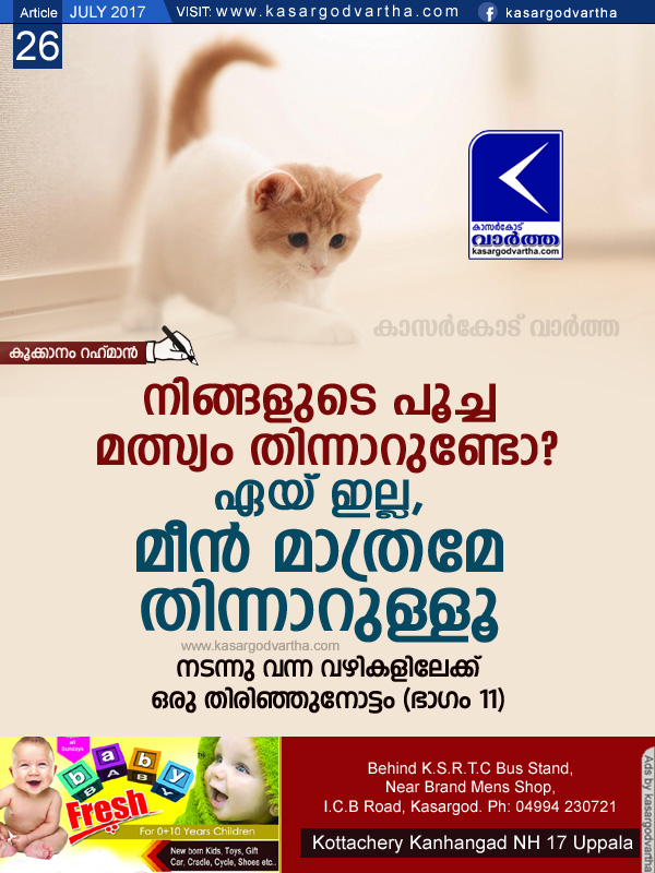 Article, Kookanam-Rahman, Cat, Fish, School, Rat, Story of my foot steps part-11.
