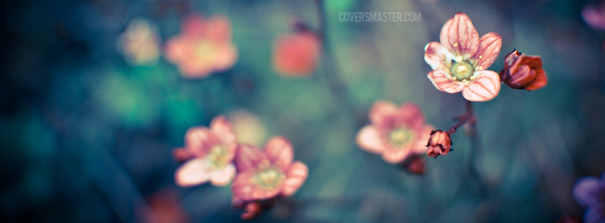 Floral Facebook Covers: Facebook Cover Photos: Fb Cover : Stylish