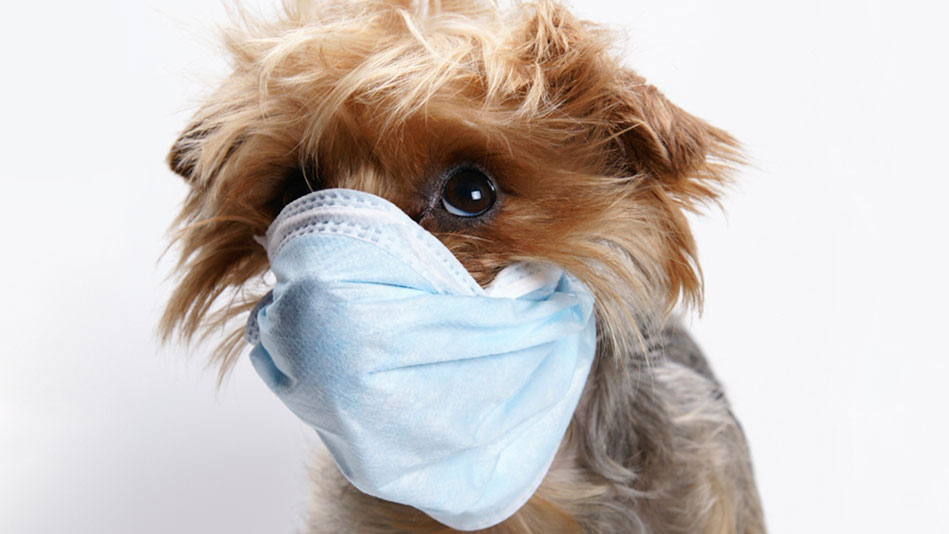 Dog-infectious-diseases-dog-wearing-mask