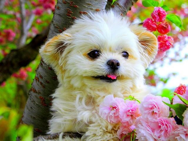 Болезнь собаки помогла девушке раскрыть измену возлюбленного
