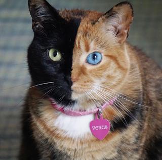 kucing unik