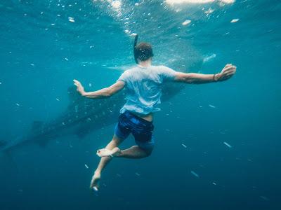 صورة لرجل في البحر وأمامه سمكة قرش تتجه نحوه