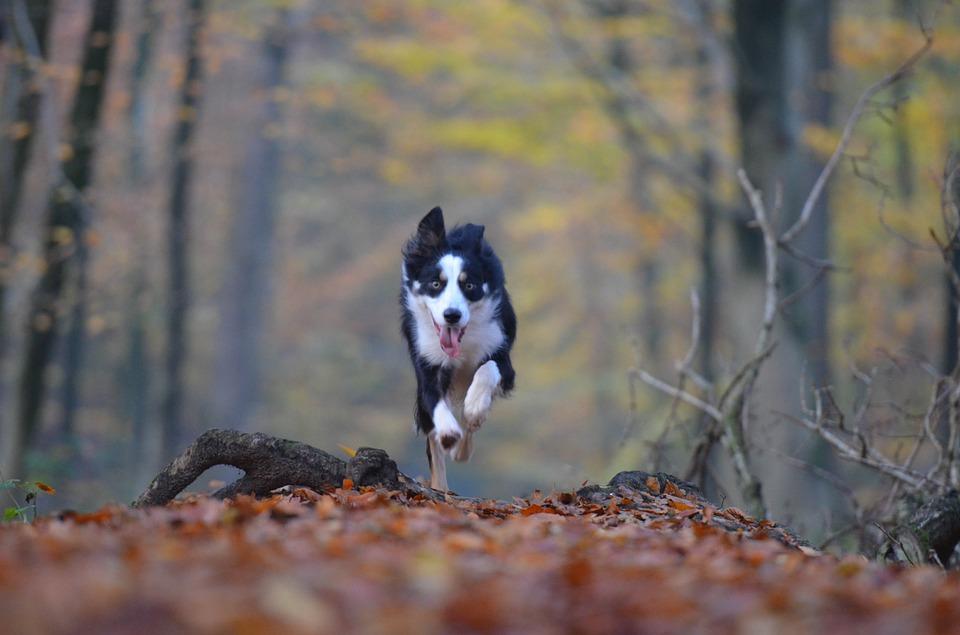 Pies i jesień