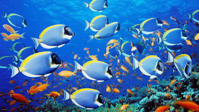 Pernahkan Kamu Berfikir Ikan Penah Tidur Atau Bahkan Menguap? Penasaran? Inilah Faktanya