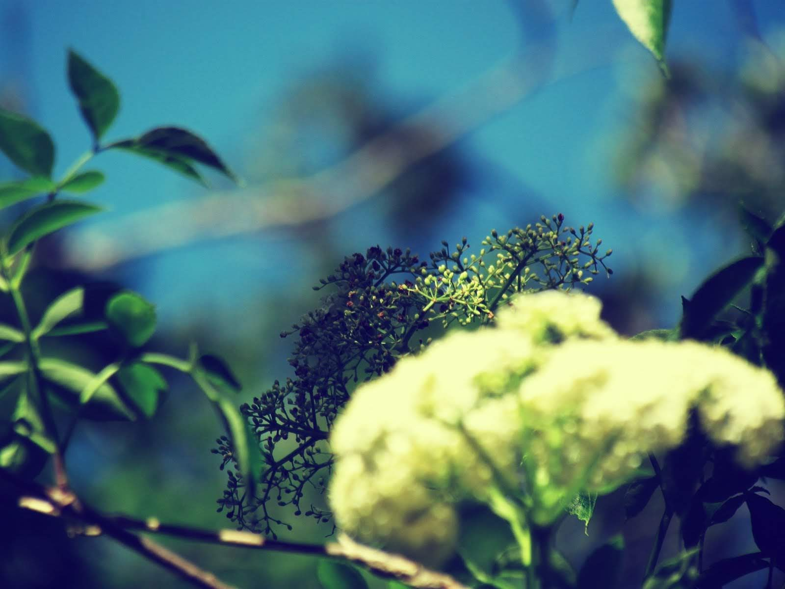 The magical properties of a flowered yarrow plant in a Florida wild forest