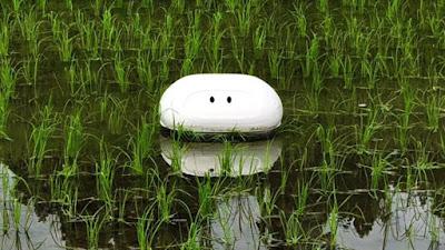 Bebek sawah yang menjadi inspirasi dari sebuah robot untuk mengurangi pertumbuhan Gulma d Aigamo, Robot Bebek Untuk Membasmi Gulma