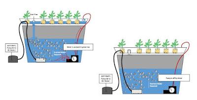 Hydroponic EBB & Flow