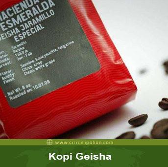 ciri ciri pohon kopi