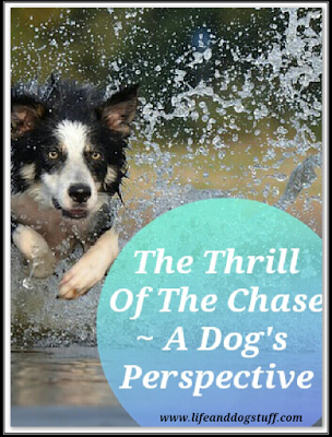 The Thrill Of The Chase - A Dog's Perspective