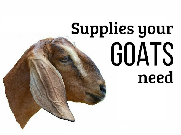 Goat Supplies You Need to Have on Hand