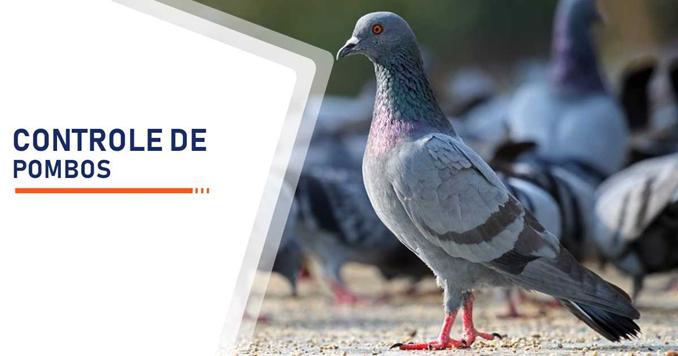 Serviço de controle contra proliferação de pombos Sp