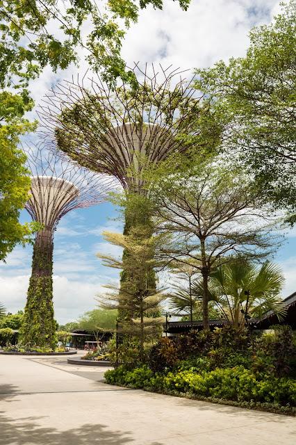 singapur, barvy, budovy, cestování, svět, gardens by the bay