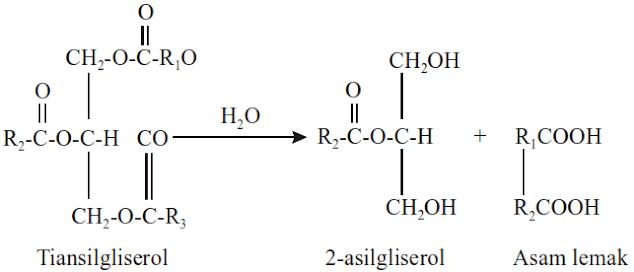 Contoh dan Proses Metabolisme Organisme, Enzim, Apoenzim, Koenzim, Glikogenesis, Glikolisis, Daur Krebs