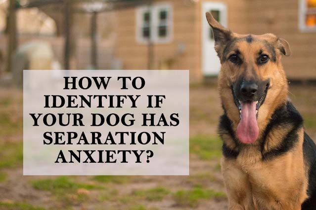 Separation anxiety in dogs: 11 identification criterias