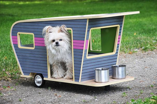 home design ideas decor for dog