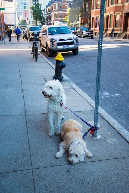 Newbury street-Boston