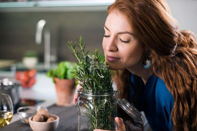 How rosemary can improve brain function?