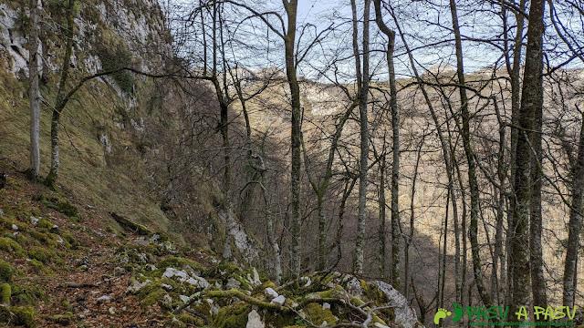 Bosque y sendero por el Camín de la Madera