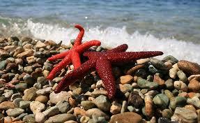 Bir Deniz Yıldızı Hikayesi 7