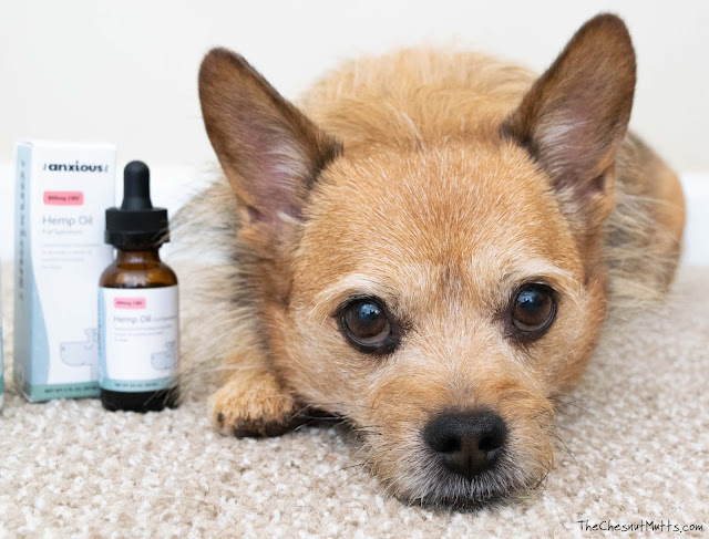 dog cbd oil for anxiety and stress