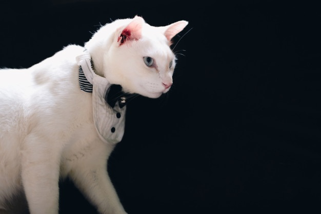 tuxedo-cats