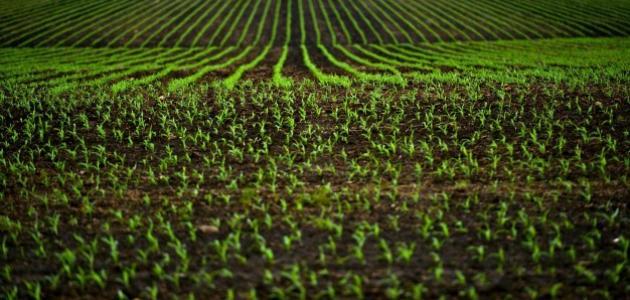 حماية التربة من التلوث