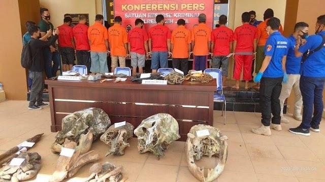 Polisi di Aceh Tangkap 5 Orang Terduga Pelaku Pembunuh 5 Ekor Gajah