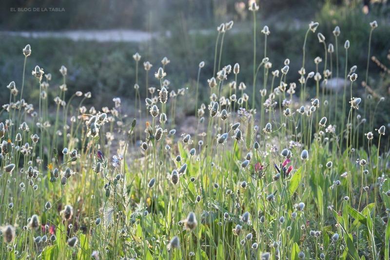 flores silvestres en el jardin