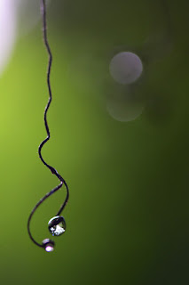 tendril and dew drops