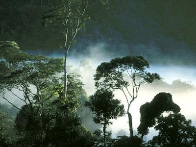 Hutan tropis jenis hutan berdasarkan iklim - berbagaireviews.com