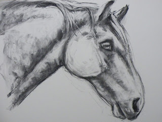 Charcoal drawing of highland pony
