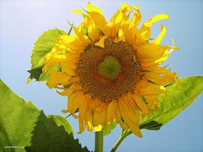 Λουλούδια που σπέρνονται την άνοιξη