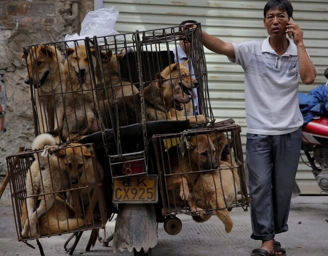 10,000 Dogs To Be Murdered At Chinese Dog Eating Festival