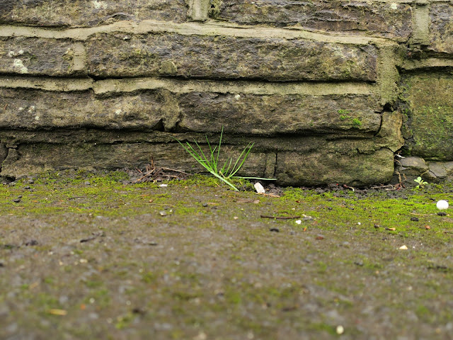 Little grass plant next to a stone wall.