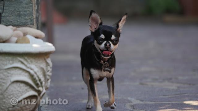 Scattare foto ai cani