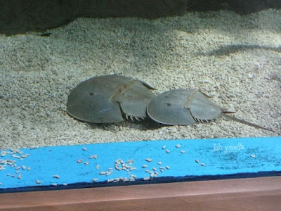 Oceanogràfic Valencia peces prehistóricos