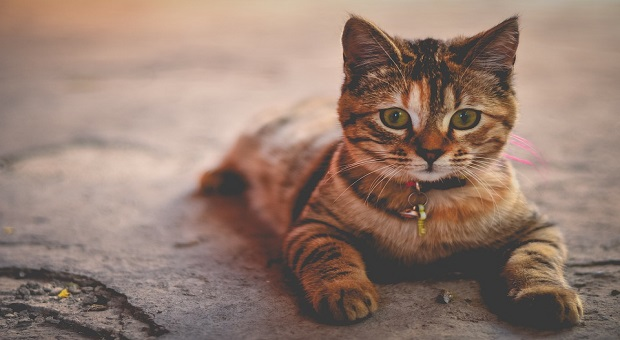 Cats And Feline Diabetes