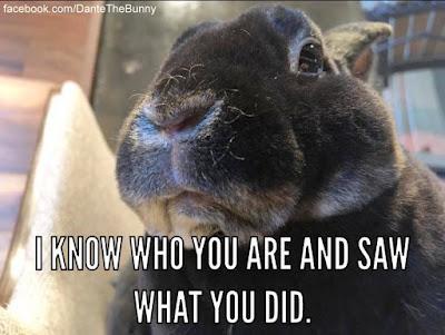 Funny Meme Rhymes : Rabbit ramblings: funny bunny memes