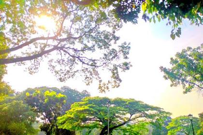 Pemandangan Indah di Halaman Depan Istana Bogor