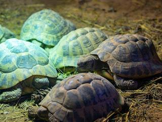 membuat-kandang-kura-kura.jpg
