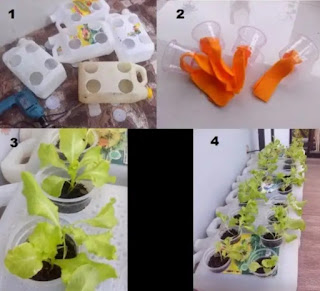 Membuat hidroponik sederhana