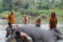 Elephant Volunteer Pinnawala Amazing