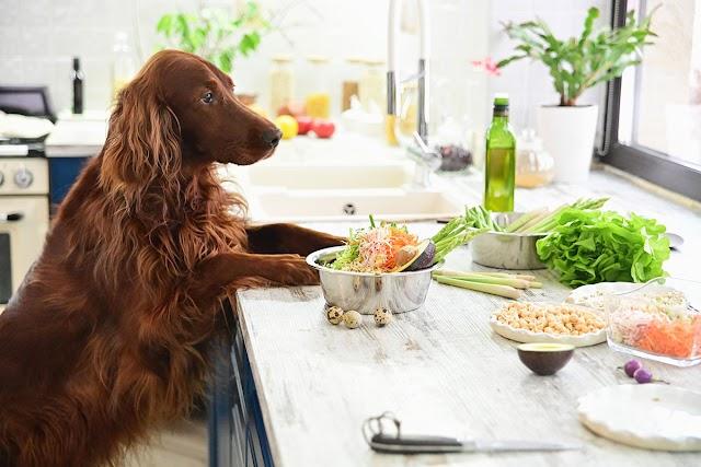 Υποθυρεοειδισμός: Πάσχουν και οι σκύλοι – Η διατροφή που βοηθά