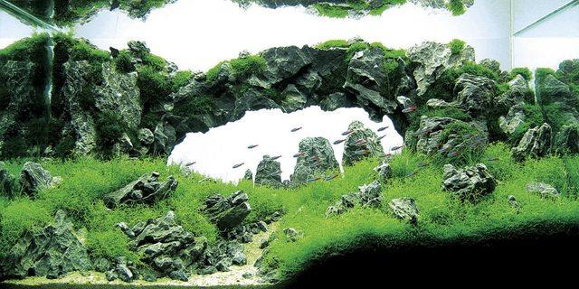 bể thủy sinh cầu vòng dán đá rất đẹp