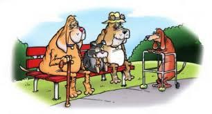 cães aposentados