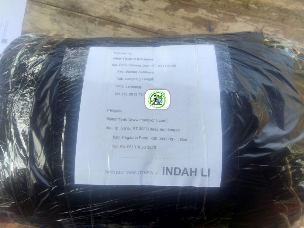Benih Pesanan OPIK Lamteng, Lampung. (Setelah packing)