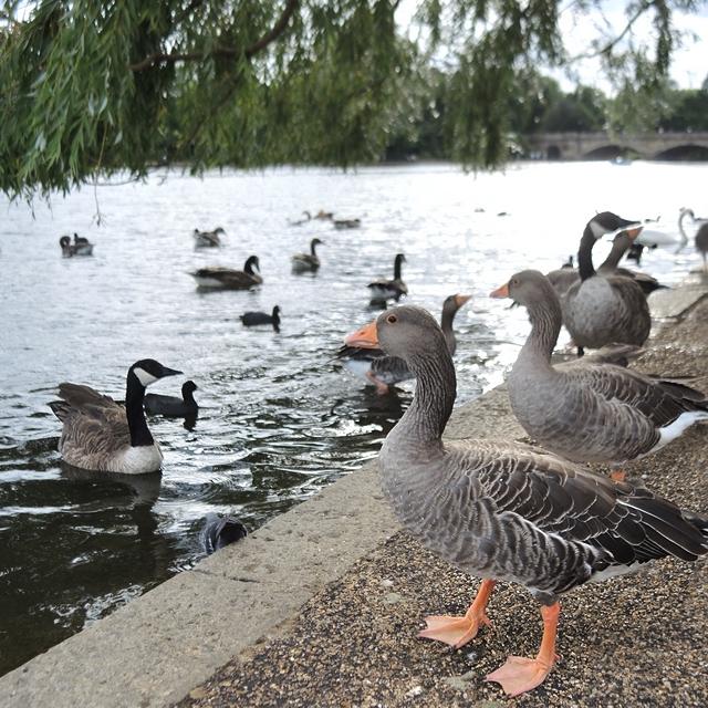 Londen: weerzien met Hyde Park