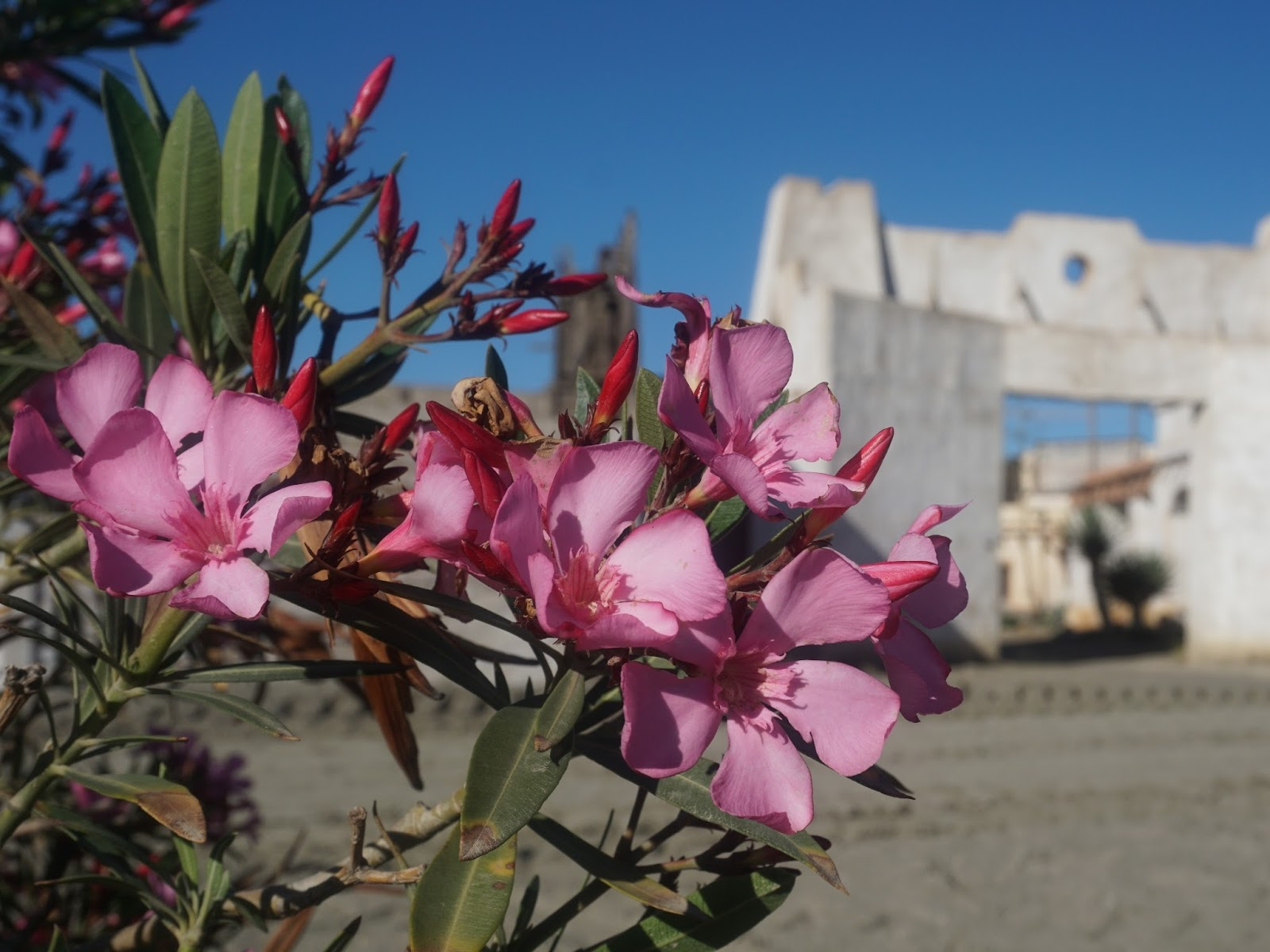 hiszpańskie kwiaty, Hiszpania, panidorcia, blog, wrażenia z Hiszpanii, podróże, mini hollywood